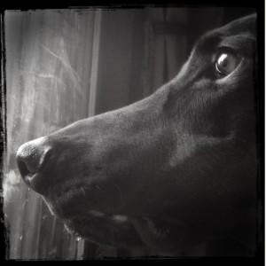 dog-separation