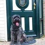 dogbydoor