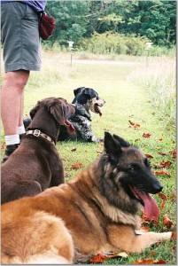 dogsingrass